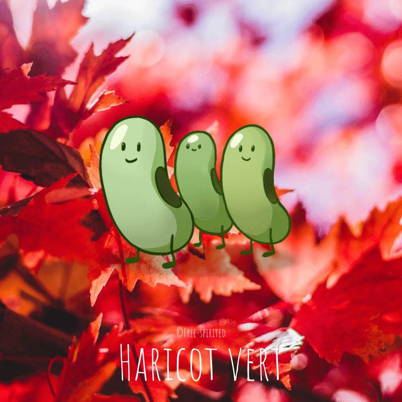 Free-spirited-fruits-légumes-saison-bio-responsable-écologie-septembre-Haricot-vert