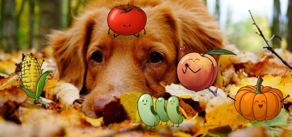 Free-spirited-fruits-légumes-saison-bio-responsable-ecologie-septembre(2)