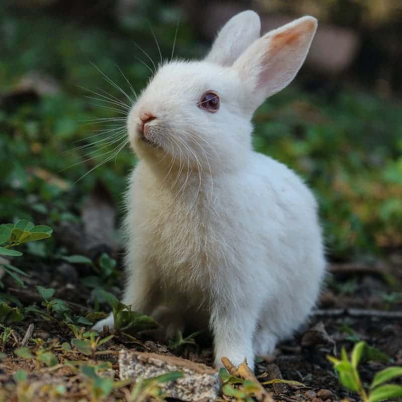 referendum-animaux-hugo-clement-maltraitance-animal-lapin