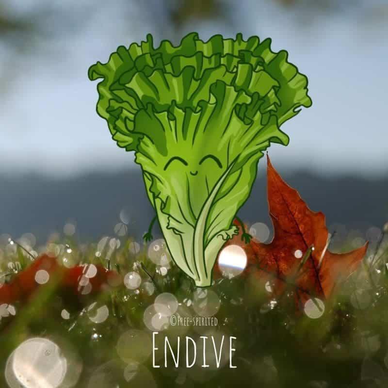 Free-spirited-fruits-légumes-saison-bio-responsable-écologie-novembre-endive