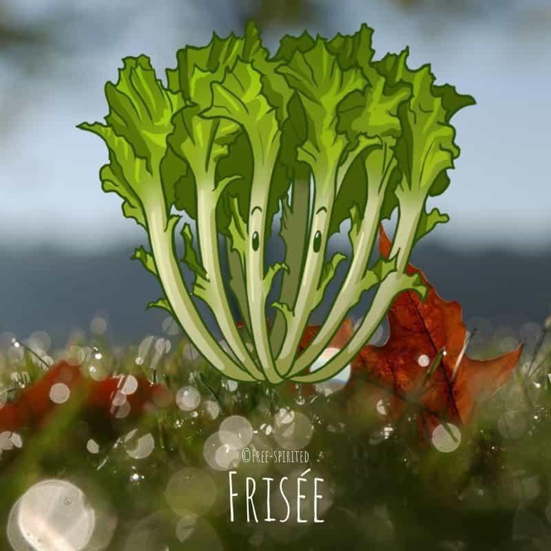 Free-spirited-fruits-légumes-saison-bio-responsable-écologie-novembre-frisee