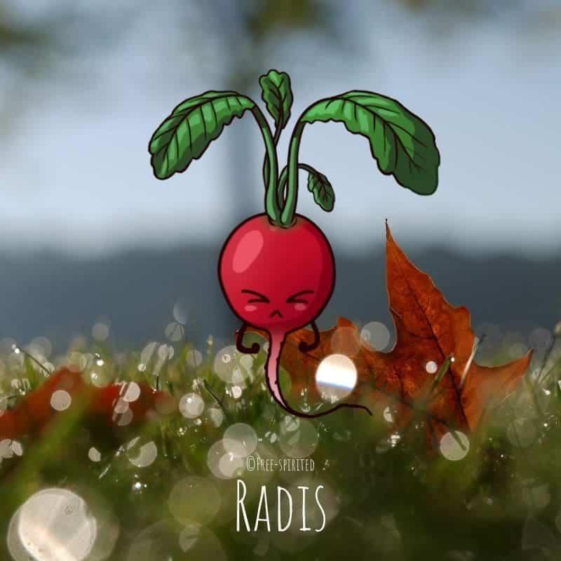 Free-spirited-fruits-légumes-saison-bio-responsable-écologie-novembre-radis