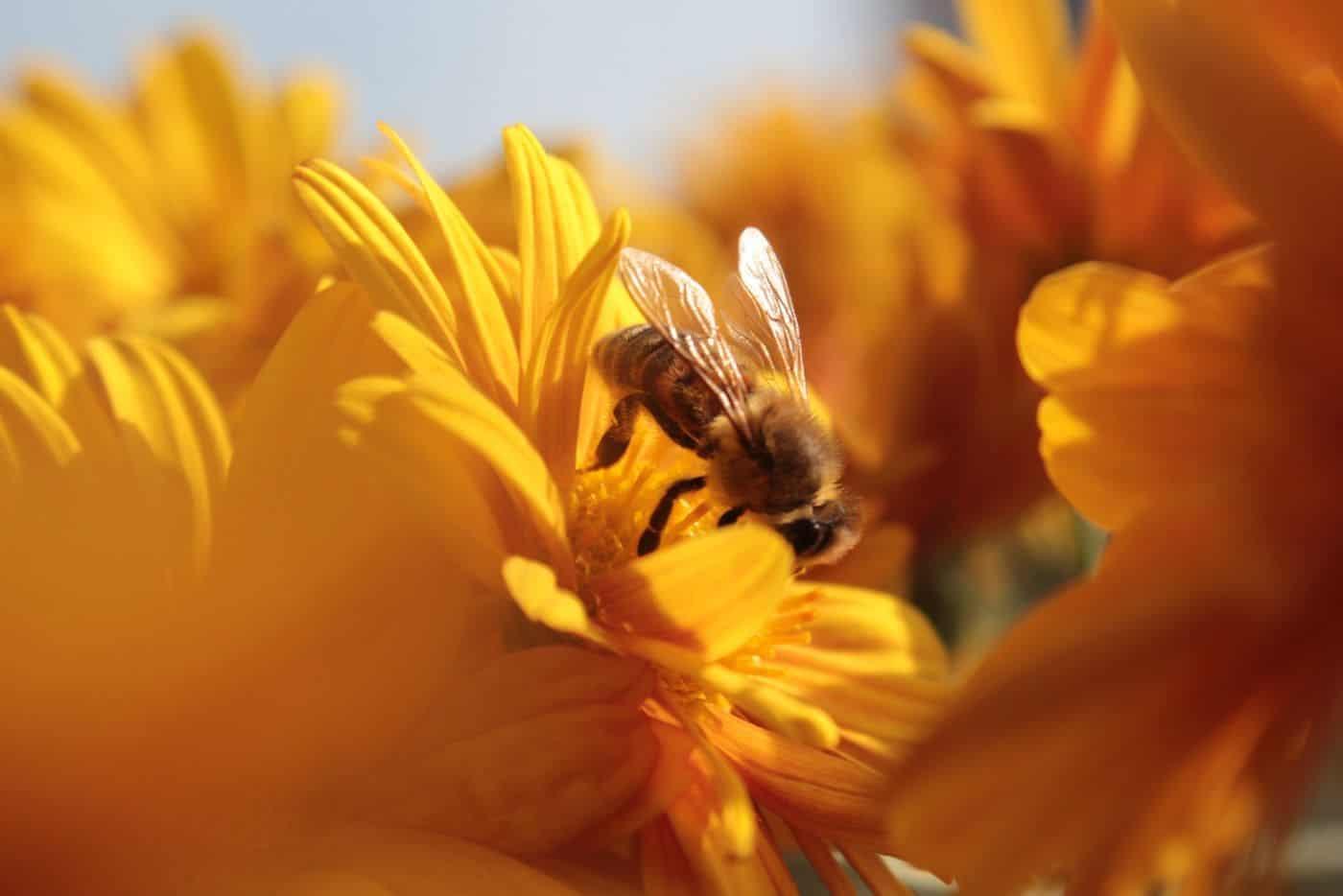 giveactions-soutenir-gratuit-projets-environnement-ecologie-biodiversité-application-gratuite-free-spirited